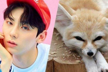 16 ไอดอลหนุ่ม ที่มีใบหน้าคล้ายกับสุนัขจิ้งจอก Fennec Fox