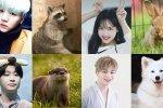 ขยี้ตาพัง! 12 ไอดอลหน้าตาดีแดนกิมจิ ที่แฟนๆ ชี้ว่า มีใบหน้าคล้ายกับเจ้าสัตว์โลกตัวน้อยๆ
