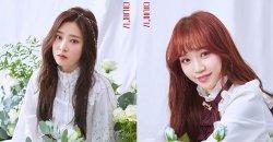 คิมแชวอน คิมมินจู และ อีแชยอน ปล่อยภาพเดบิวท์ในเวอร์ชั่น ดอกกุหลาบหลากสี!