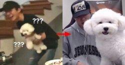 แฟนๆ มั่นใจแล้วว่า เจ้าตูบของ เซฮุน EXO จริงๆ แล้ว คือ ลูกแกะ