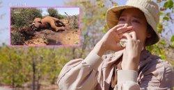 พัคชินฮเย ถึงกับน้ำตานอง หลังเห็นสัตว์ถูกล่าใน แอฟริกา